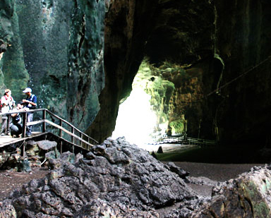 You are browsing images from the article: Gomantong Cave