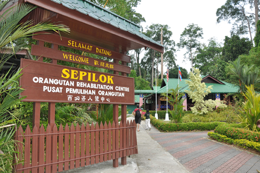 You are browsing images from the article: WA1505 - Sandakan Wildlife Safari - Sepilok / Sukau Bilit / Oxbow / Cave / City