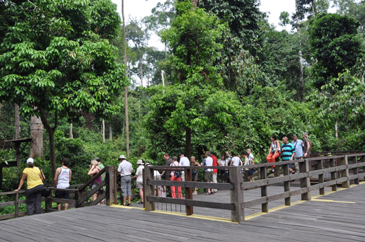 You are browsing images from the article: WA1501 - Sandakan - Sepilok Orang Utan Centre & City Tour